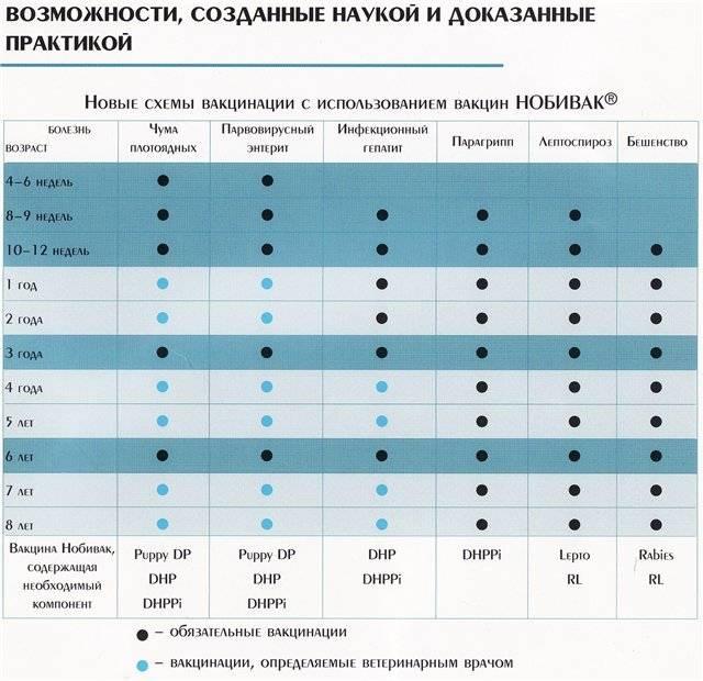 Прививки собакам по возрасту таблица и график: цена