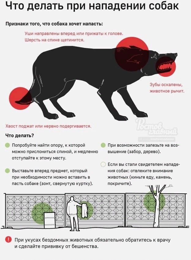 Как защитить себя и ребенка при нападении бродячей собаки ~ блог о детях