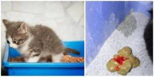 Рвота у кошек: причины и лечение в домашних условиях