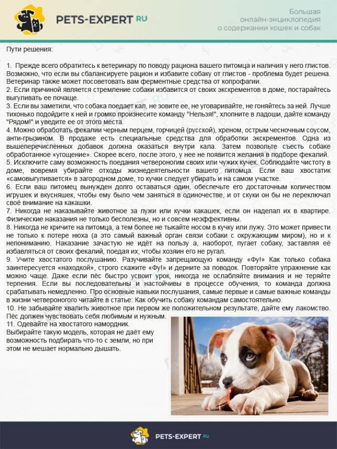 Собака ест фекалии: почему и что делать?