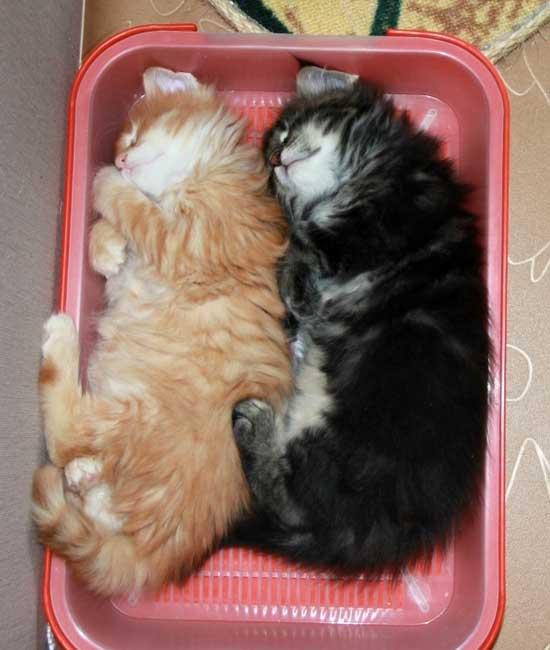 Как приучить кота к лежанке: советы и рекомендации как приучить кота к лежанке: советы и рекомендации