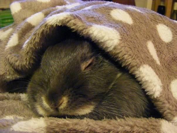 Продолжительность сна у декоративных кроликов: спят ли они с открытыми глазами