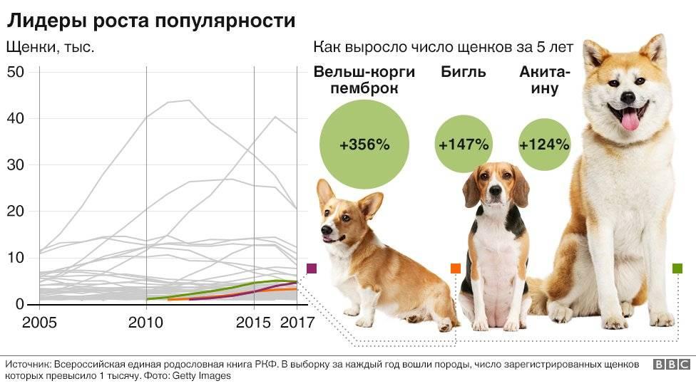Сколько всего пород собак в мире число. информация про собак самых разных пород, которые существуют на планете. сколько пород собак существует в мире по ркф и fci