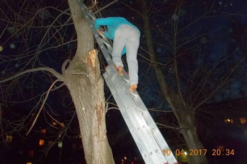 Как снять кошку с дерева?