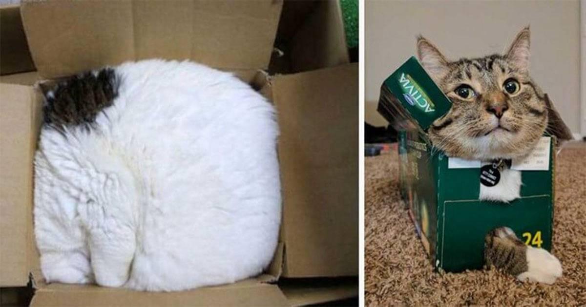 5 причин, почему кошки так сильно любят коробки - лайфхакер