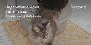 В каком возрасте у кошек появляется недержание мочи?