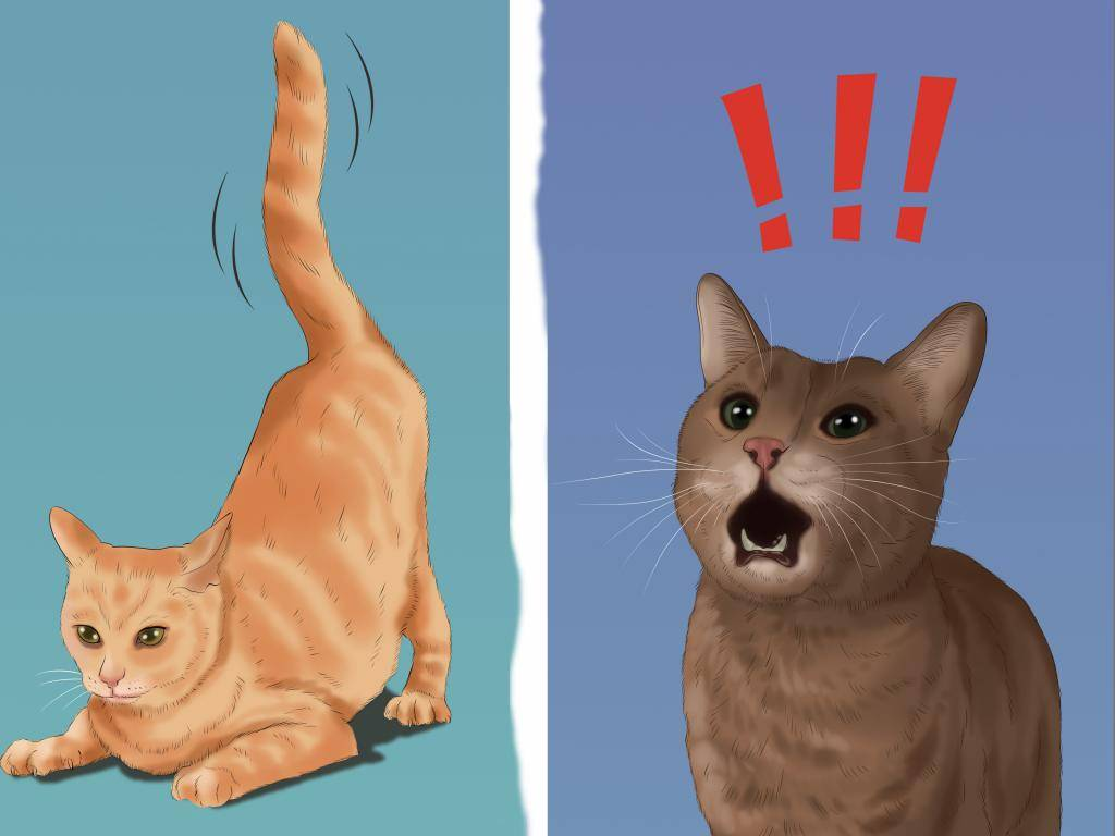 Как определить пол котенка и отличить мальчика от девочки в маленьком возрасте, в 1 и 2 месяца