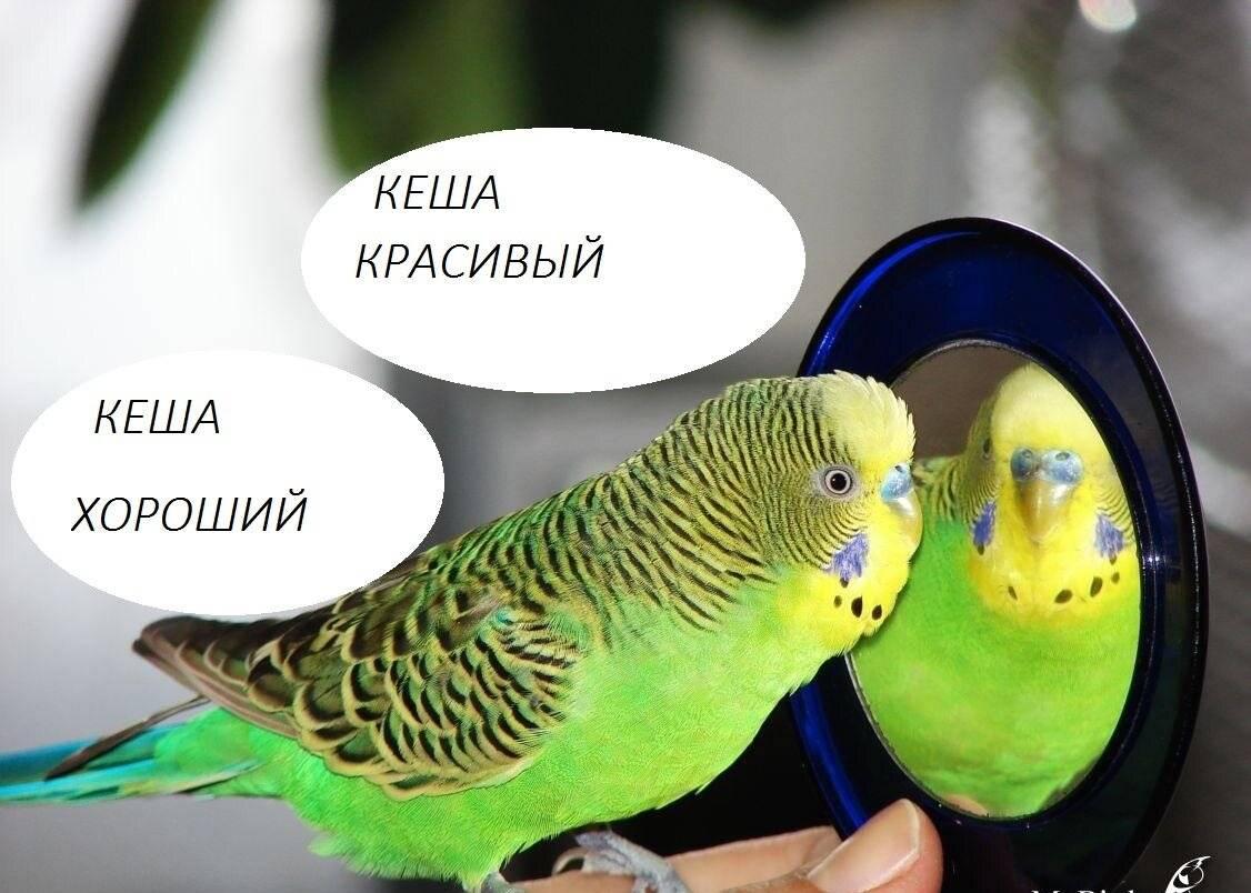 """Методика """"как научить попугая говорить"""" и семь ключевых факторов успешного обучения"""