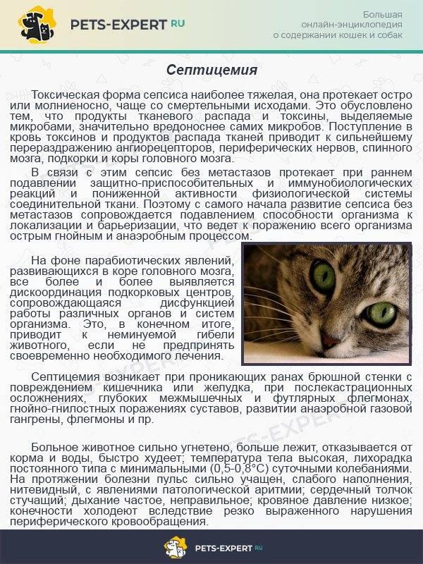 Байтрил для кошек: состав и формы выпуска, показания и инструкция по применению, аналоги и отзывы