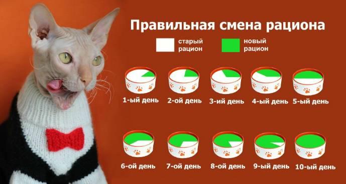 Как правильно кормить кошку: корма и питание для животного