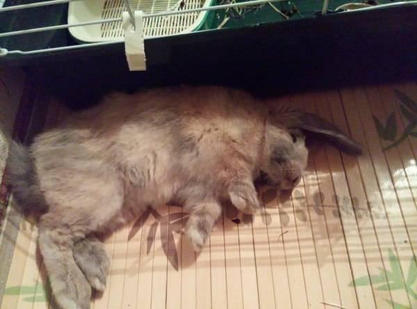 Закрывают ли кролики глаза когда спят. как и сколько спят эти зверьки