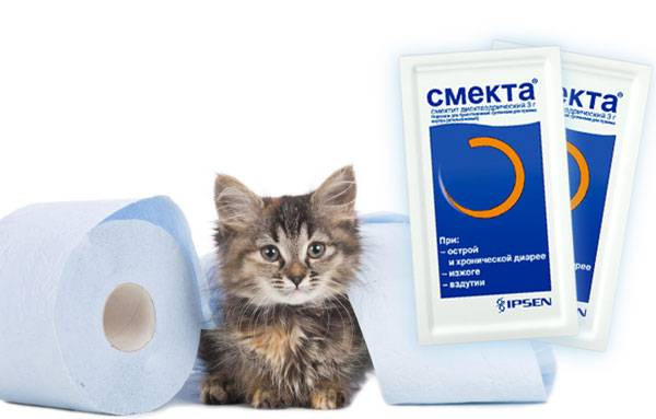 Понос у кошек и котов: причины и лечение
