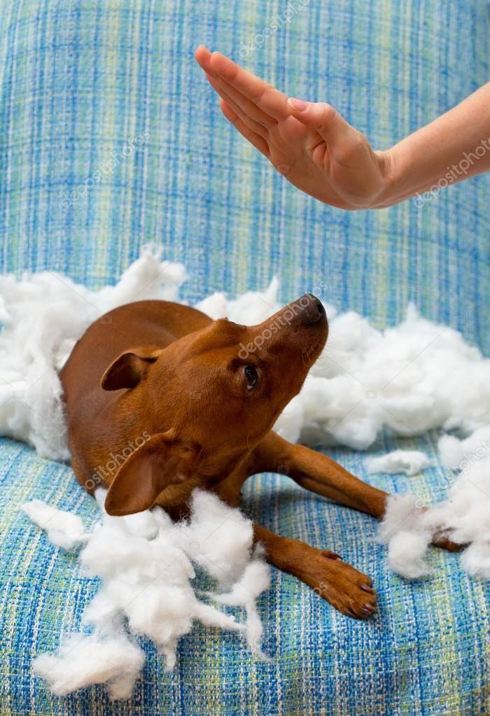Как правильно наказывать собаку за непослушание и плохое поведение