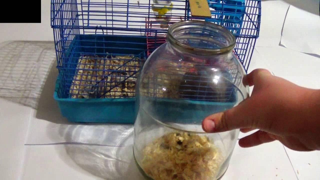 Колесо для хомяка: разновидности, выбор и приучение