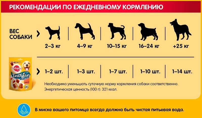 Сколько нужно давать сухого корма щенку в 3 месяца: в сутки и за раз