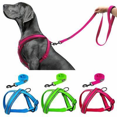 Шлейка для хаски или ошейник: что лучше для собаки и можно ли использовать электроошейник для домашнего питомца