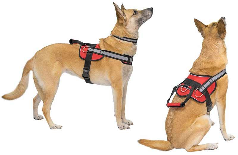 Шлейка для собак: удобный способ держать питомца на поводу