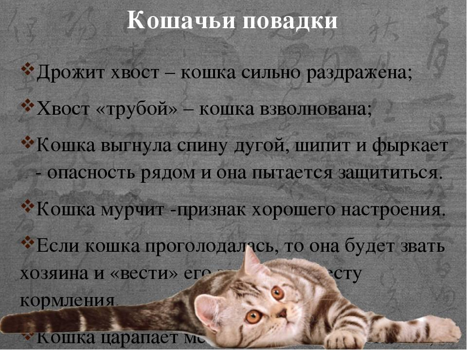 Особенности строения молочной железы у кошки