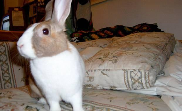 Имена для кроликов или как назвать пушистого друга
