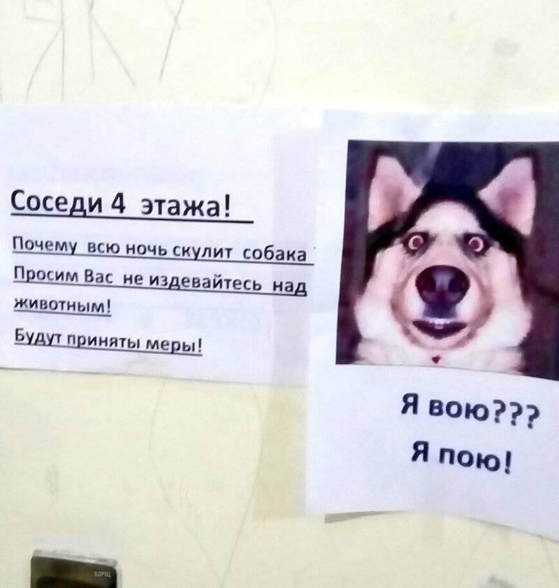 Что делать по закону, если у соседей постоянно лает собака в квартире