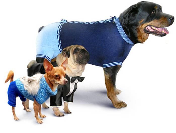 Породы собак средних размеров с фото, названиями и особенностями характера