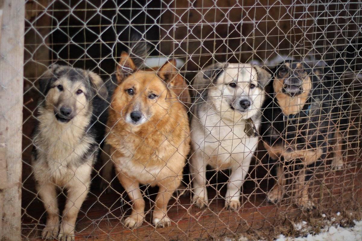 """Как взять собаку из приюта - правила """"усыновления"""" животных"""