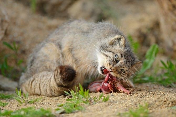 Кошка на даче: везти нельзя оставить