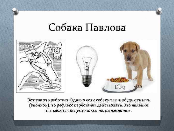 Рефлексология: и.м. сеченов, и.п. павлов, в.м. бехтерев ? психология - impsi.ru