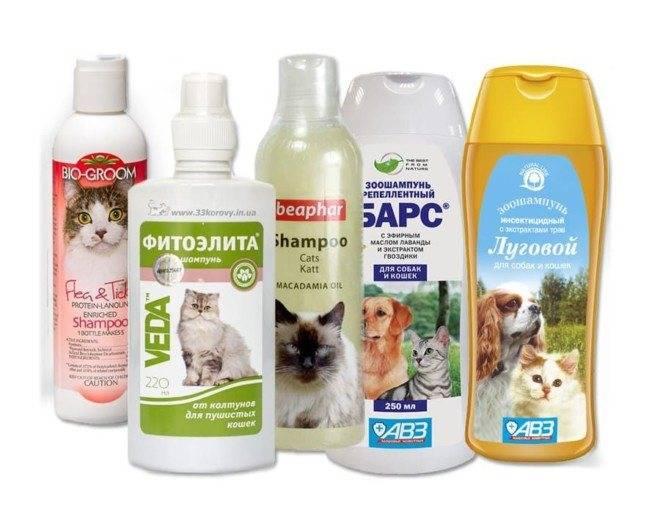 Можно ли кота мыть обычным шампунем? почему нельзя мыть кошку человеческим шампунем для взрослых людей? можно ли купать котенка детским средством?