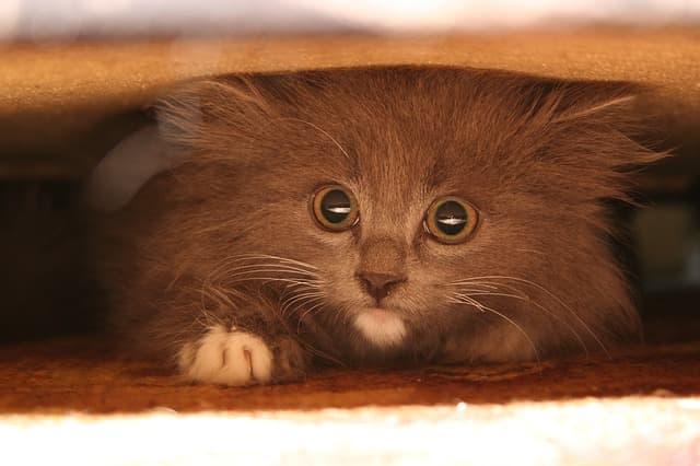 Кошка прячется в темные места — почему и что делать?