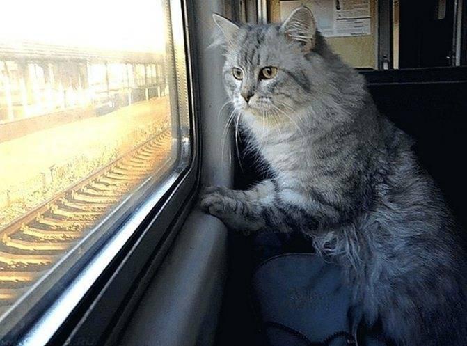 """Как происходит перевозка собак в поезде оао """"ржд"""""""