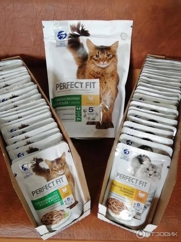 Отзывы ветеринаров о популярном корме для кошек перфект фит