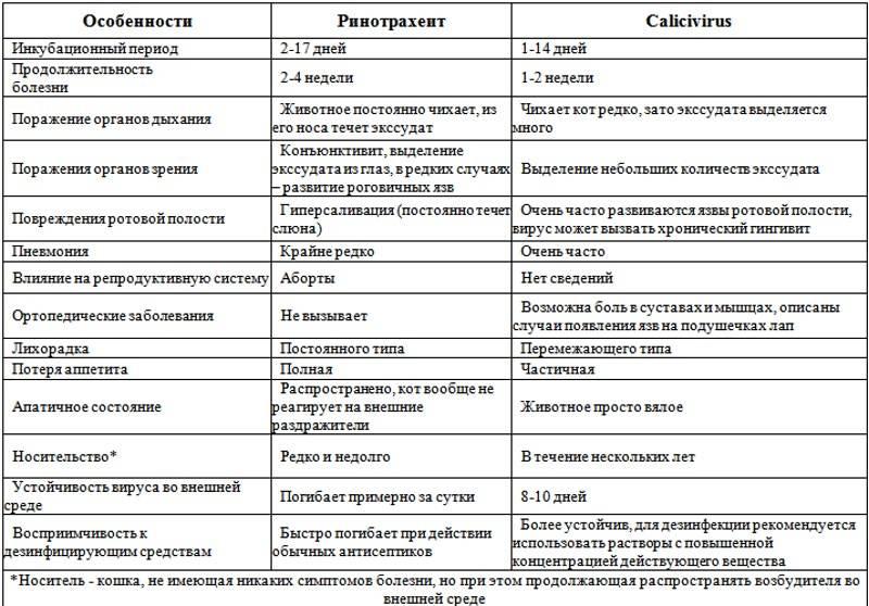 ᐉ инфекционные болезни кошек - ➡ motildazoo.ru