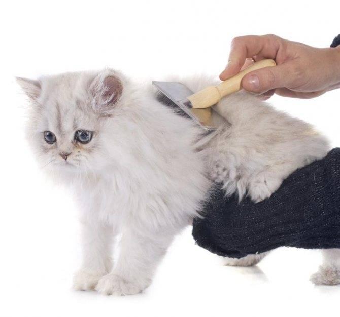 Колтуны у кошки и котов причины появления и как их удалить