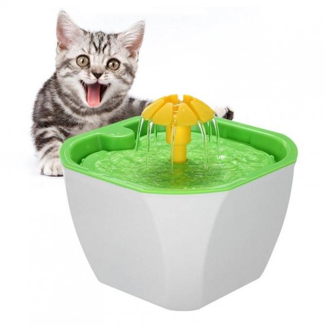 Автопоилка для кошки — выбираем лучшую