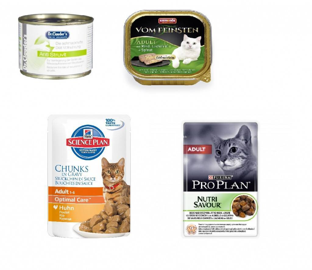 Лучший корм для кошек по мнению ветеринаров, выбор вида и калсса корма