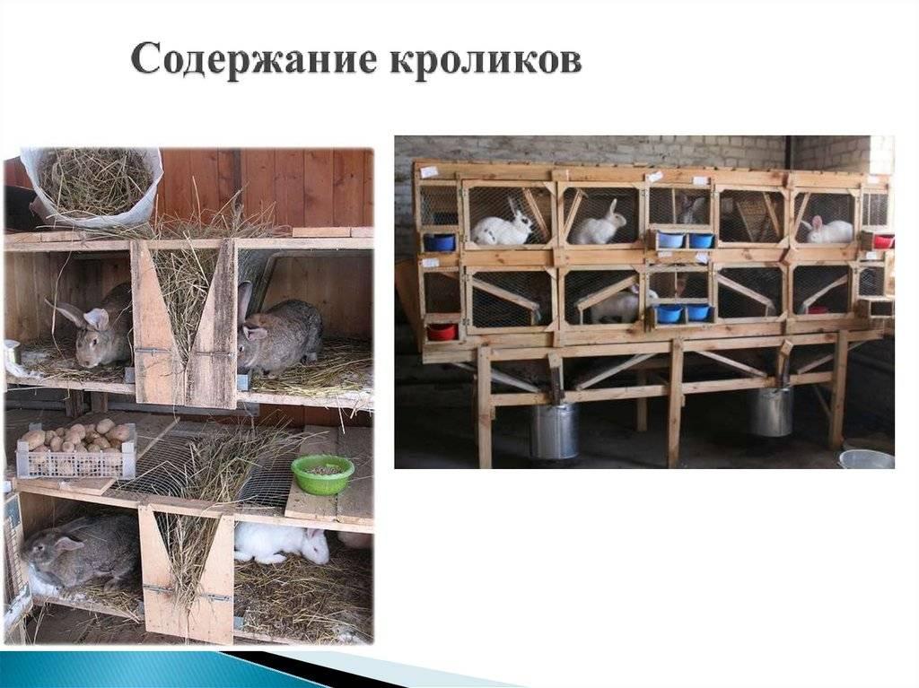 Содержание кроликов зимой на улице — кормление и необходимые условия