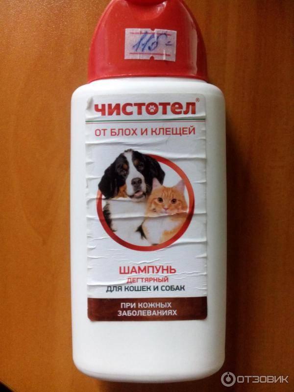 Как мыть собаку шампунем: все правила и секреты