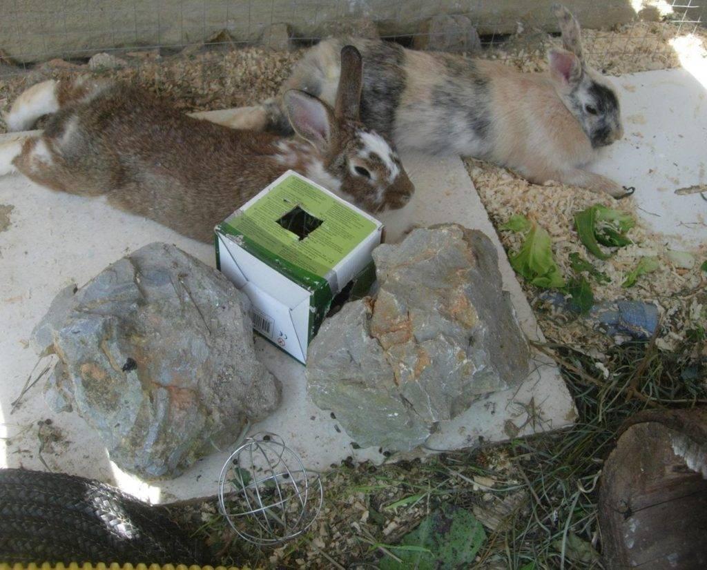 Мёртвый кролик: почему дохнут, что делать