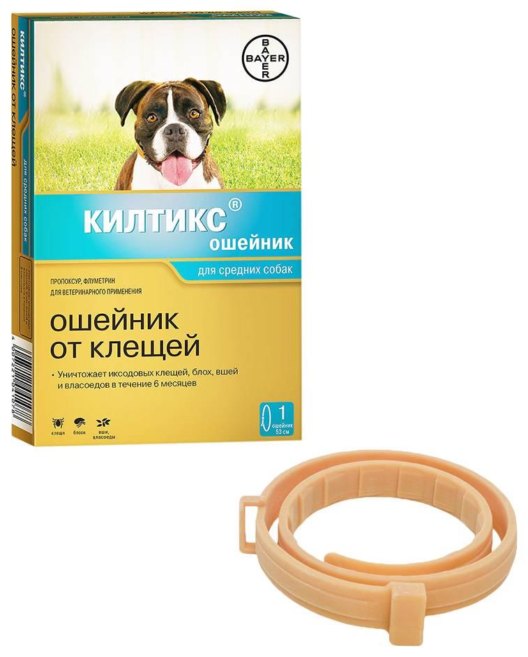 Ошейник от клещей для собак: какой лучше?