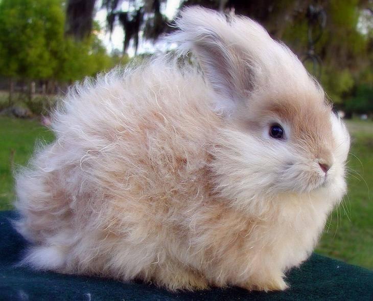 Породы кроликов: описание меховых и мясных домашних пород