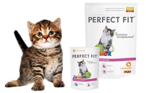 Корм для кошек perfect fit: отзывы и разбор состава