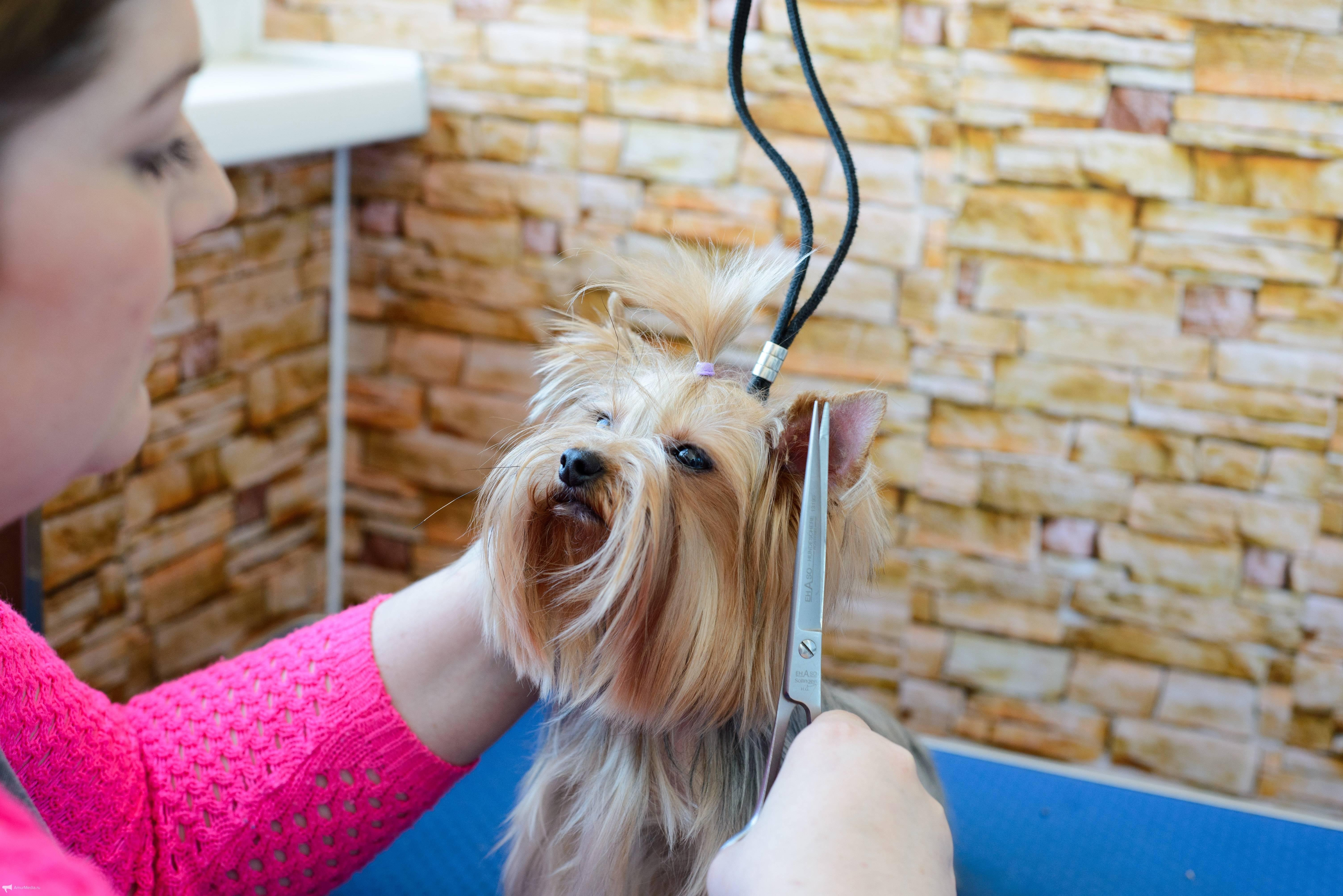 Профессии связанные с собаками: как называется дрессировщик собак? кто занимается стрижками? зачем нужен выгульщик? список профессий для девушек