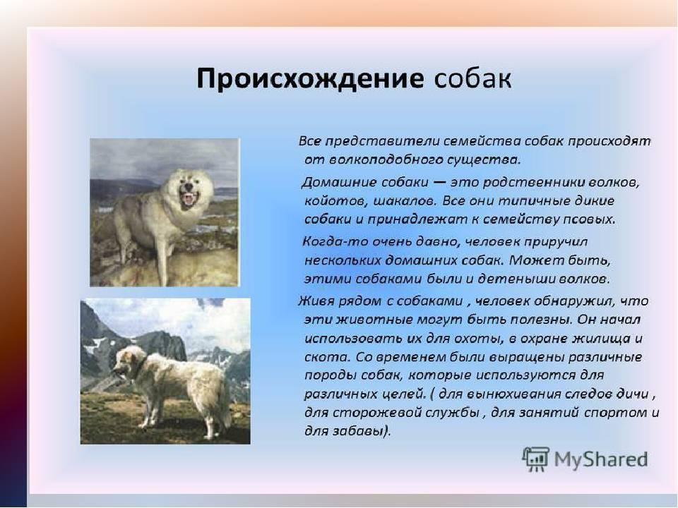 Происхождение собак: история и интересные факты