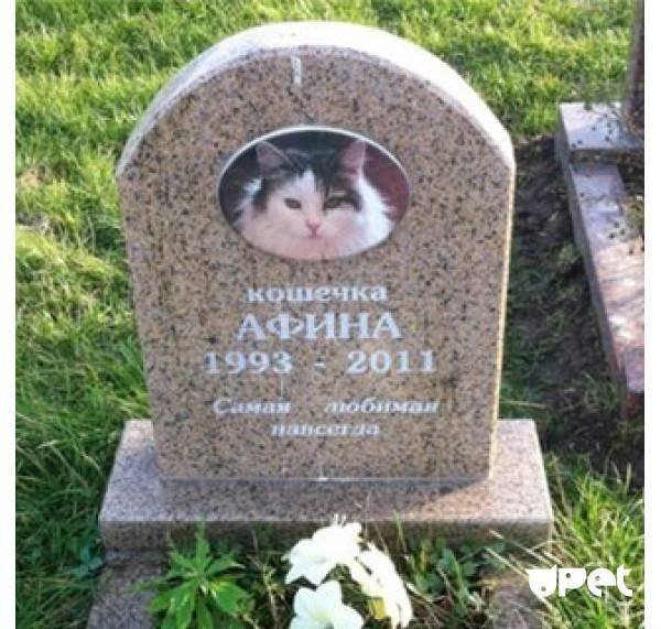 Как хоронят котов домашних в православии. где и как правильно похоронить кошку (деликатная тема). места захоронения домашних животных