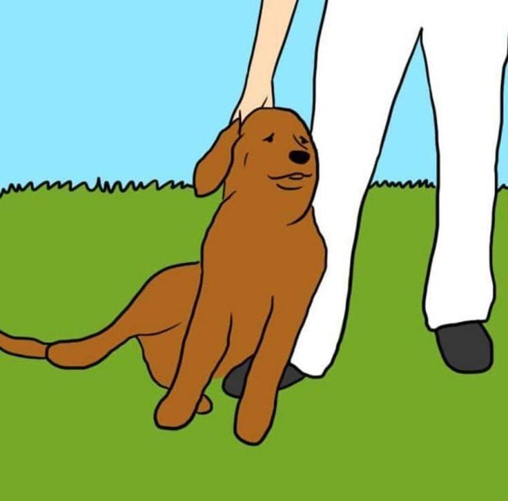 Что означает если собака начала постоянно лизать ноги своему хозяину
