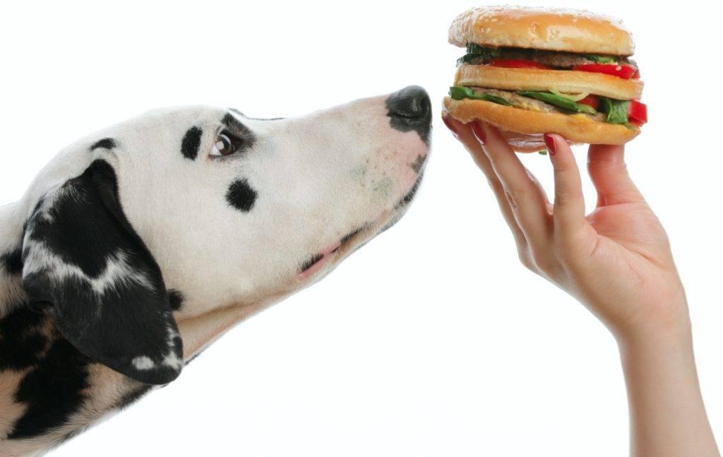 Питание собак натуральной пищей: какие крупы, фрукты и овощи можно давать собаке