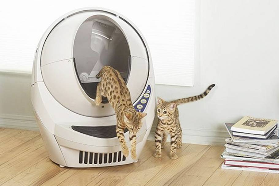 Туалет для кошки: как выбрать. 3 совета от заводчиков - kotiko.ru туалет для кошки: как выбрать. 3 совета от заводчиков - kotiko.ru