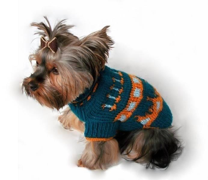 Вязание для собак мелких пород спицами и крючком: как связать одежду той-терьеру, йорку, чихуахуа?