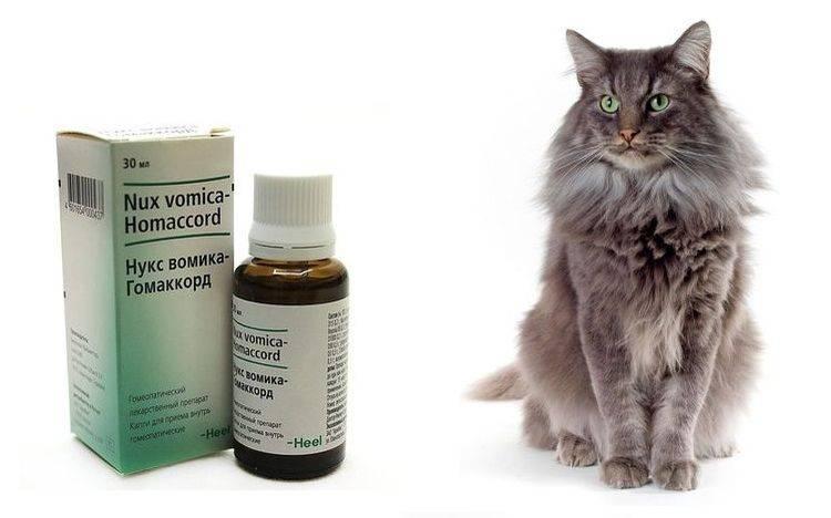 Когда у котёнка запор - выбираем средство в качество слабительного